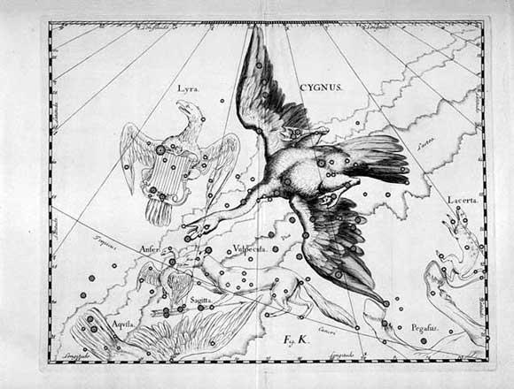 Cigno visto da Hevelius
