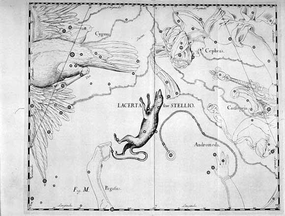 Lucertola visto da Hevelius