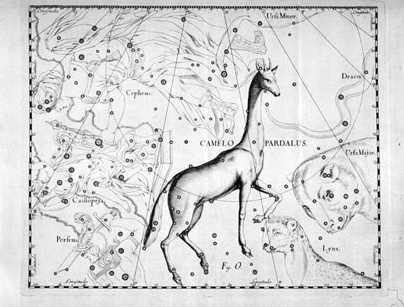 Giraffa visto da Hevelius